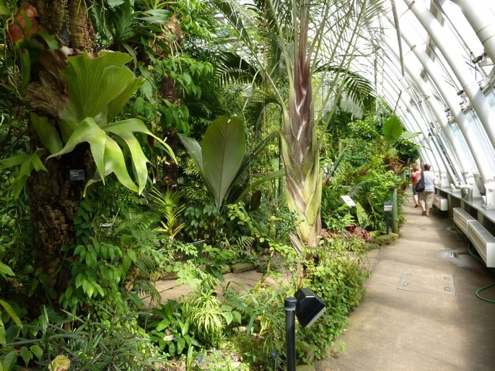 Greenhouse Fata Morgana - Tropical forests in Prague, The Czech Republic 10