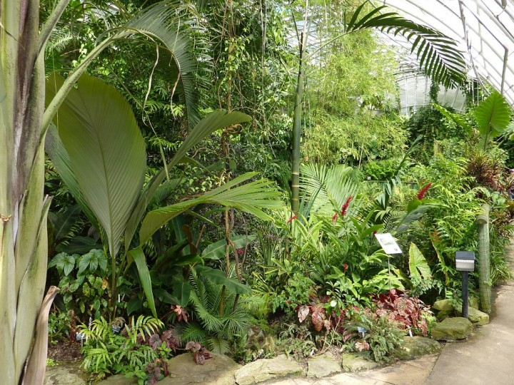 Fata Morgana greenhouse - Tropical forests in Prague, The Czech Republic 11