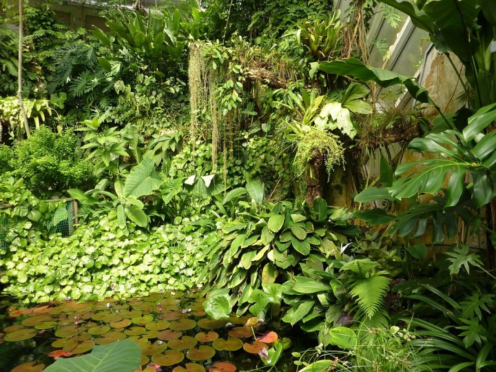 Greenhouse Fata Morgana - Tropical forests in Prague, The Czech Republic 12