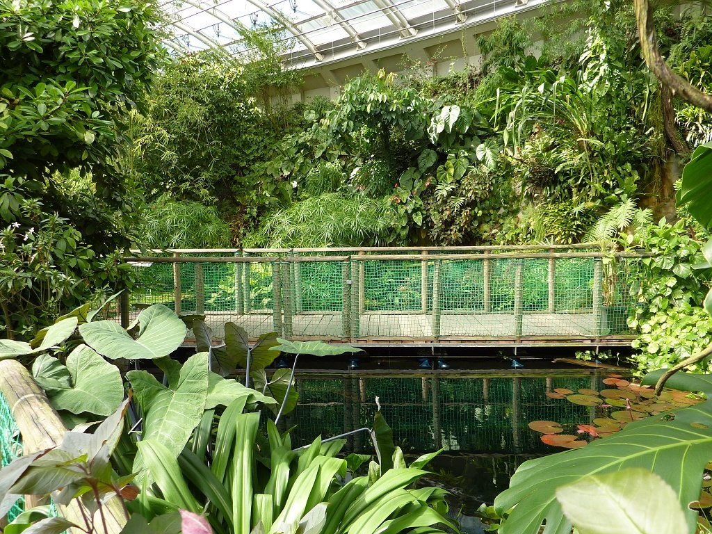 Fata Morgana greenhouse in Prague – visit tropical rain forest in Europe