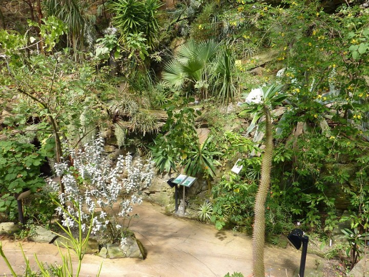 Greenhouse Fata Morgana - Tropical forests in Prague, The Czech Republic 2