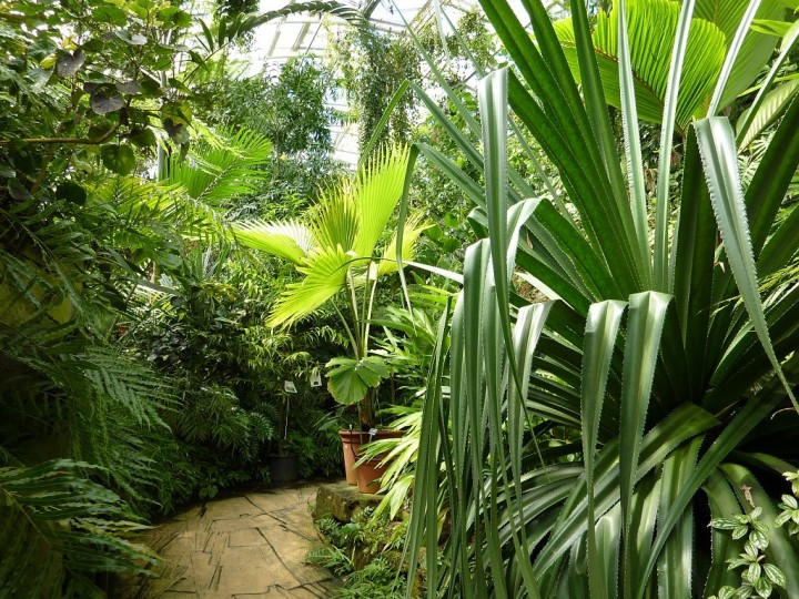 Greenhouse Fata Morgana - Tropical forests in Prague, The Czech Republic 3