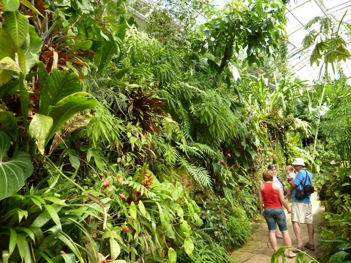 Fata Morgana greenhouse - Tropical forests in Prague, The Czech Republic 4