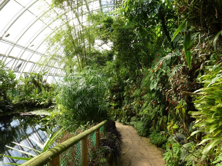 Fata Morgana greenhouse - Tropical forests in Prague, The Czech Republic 5