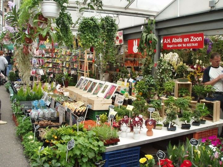 Bloemenmarkt - flower market, Things to do in Amsterdam, Netherlands