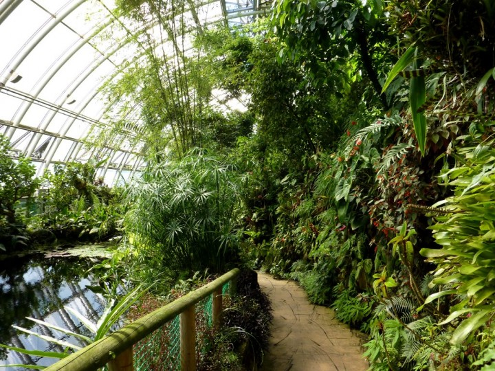 Tropical forest Fatamorgana greenhouse, Things to do in Prague, The Czech Republic