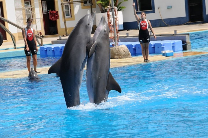 Dolphins show in Zoological Garden, Top Places to see in Lisbon, Portugal