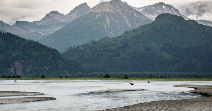 Bears at Lake Clark National Park, US National Parks