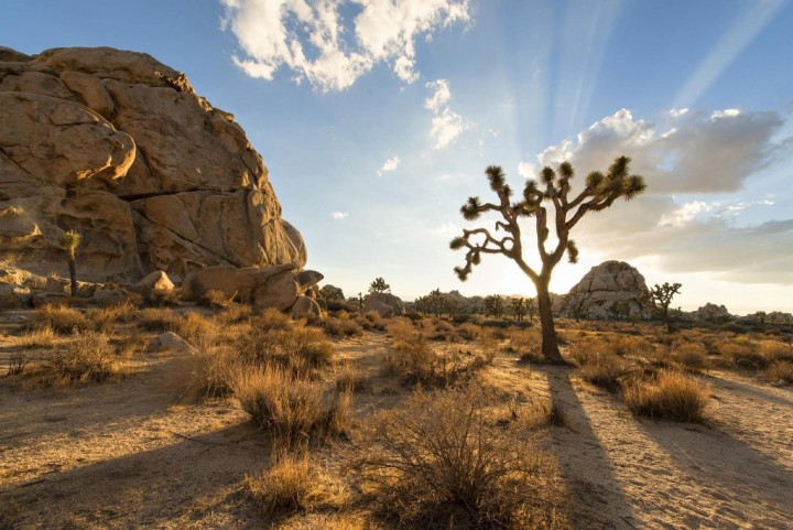 Joshua Tree National Park, US National Parks