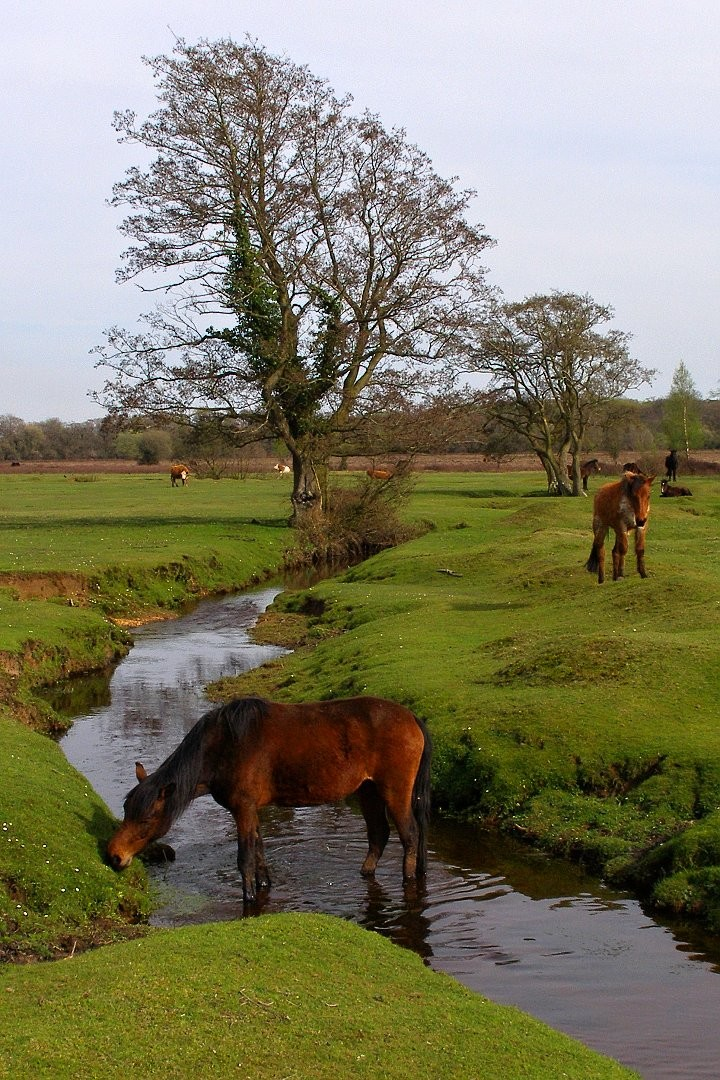 New Forest National Park, England, National Parks in the UK