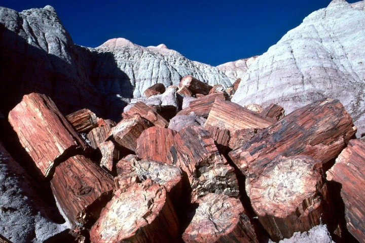 Petrified wood at Petrified Forest National Park, US National Parks