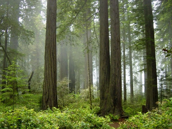 Redwood National Park, US National Parks