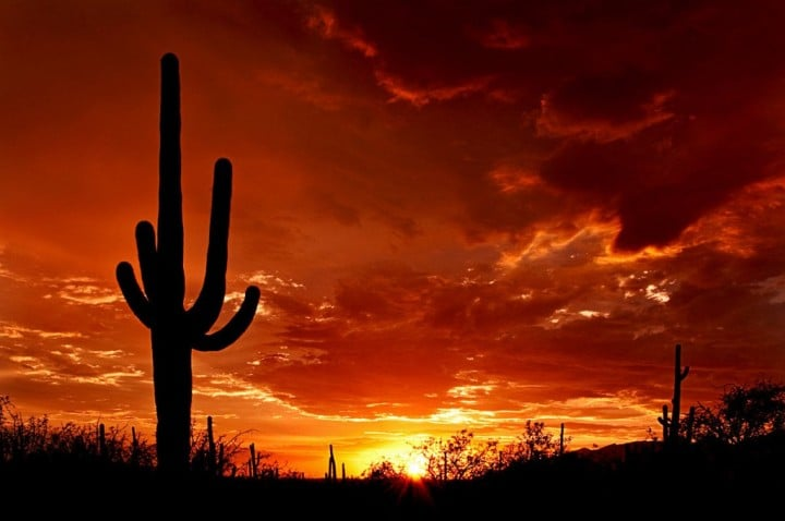 Saguaro National Park, US National Parks