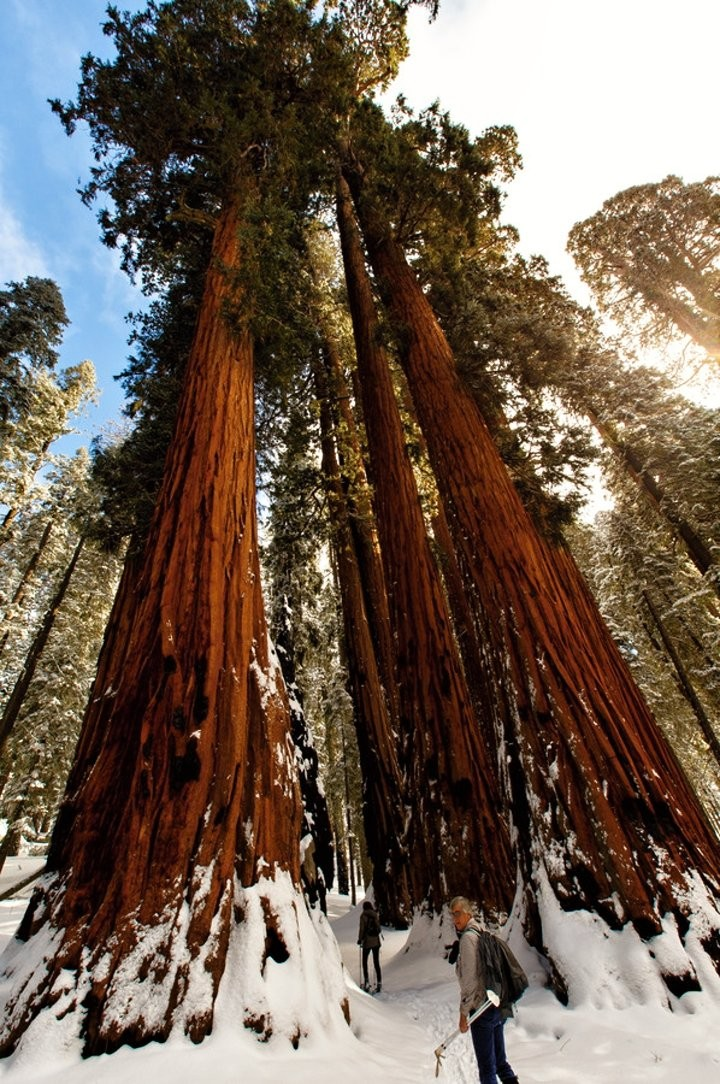 Sequoia National Park, US National Parks