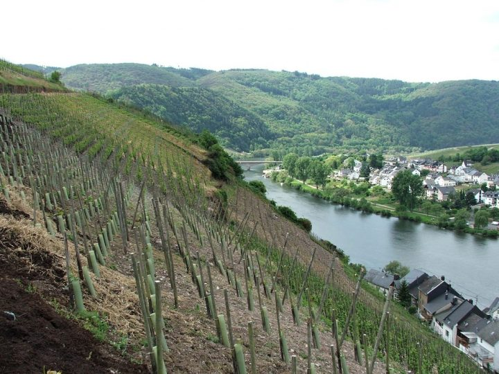 A steep vineyard overlooking the Mosel River, Traveling to Germany