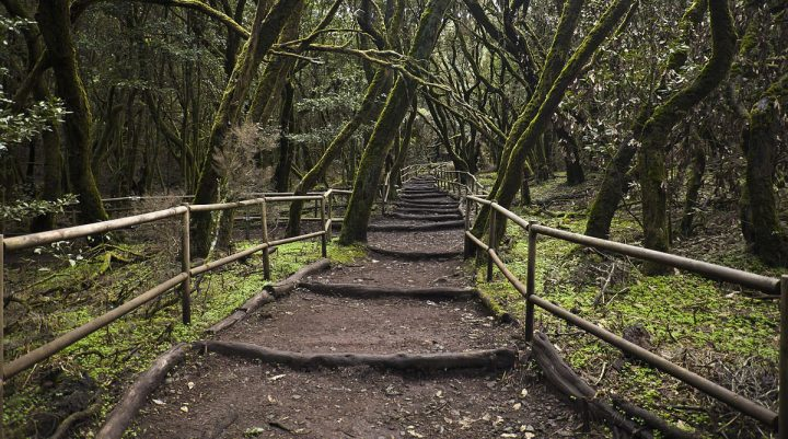Enchanted Forest, Garajonay National Park, La Gomera, Canary Islands, Spain