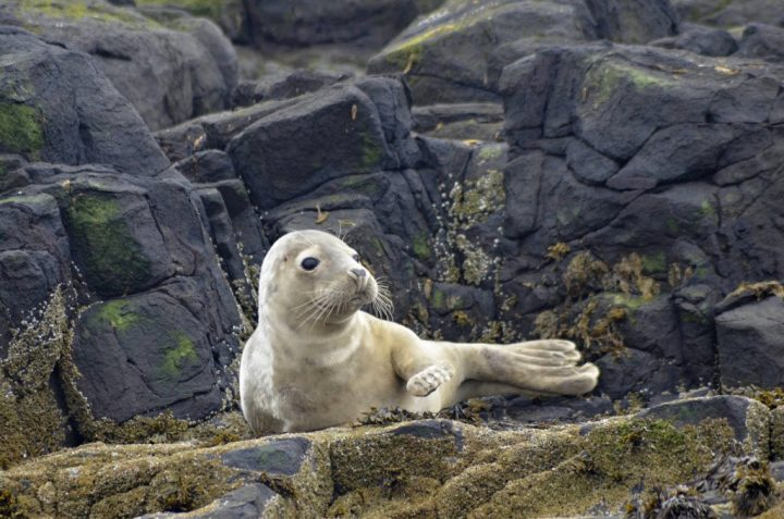 Seal at Farne Islands, Diving in the UK