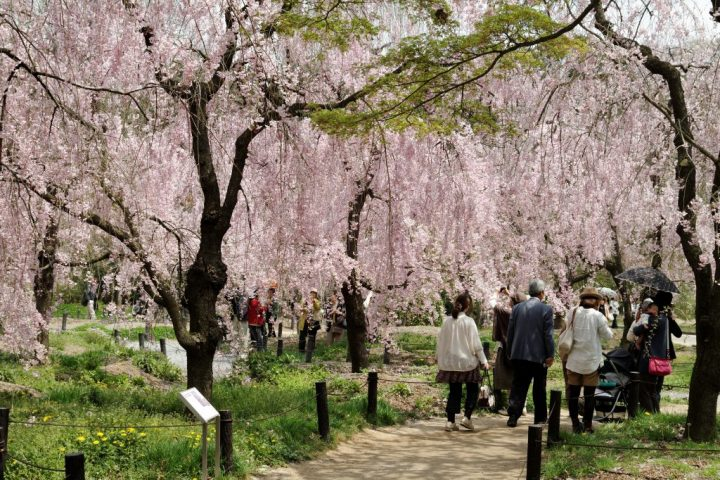 Kyoto Botanical Garden, Japan, Best Honeymoon Destinations in Asia