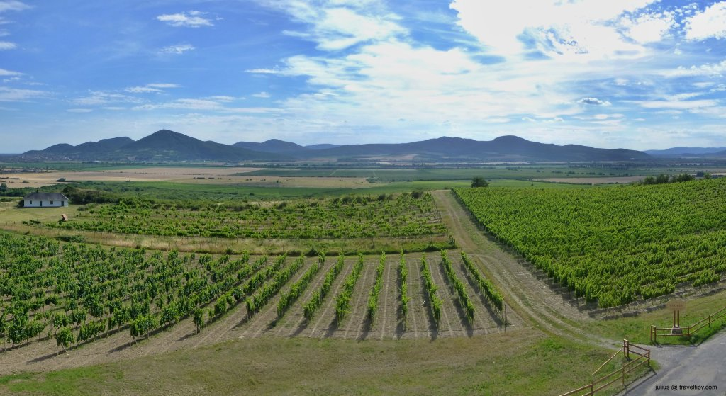 Visiting Tokaj wine region in Slovakia – relaxing holidays full of tasty wine, cycling, boating…