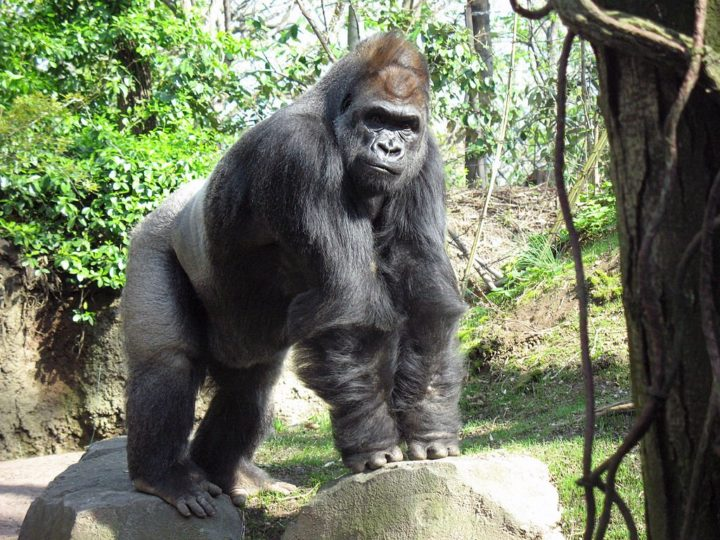 Bronx Zoo, Things to do in NYC, USA