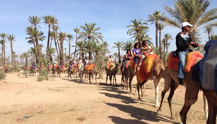 Camel Tour, best things to do in Marrakech
