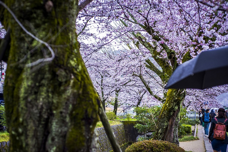 Path of philosophy, best area to stay in Kyoto