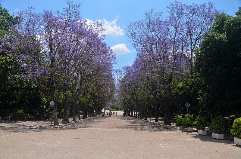 Visit the National Gardens, Athens